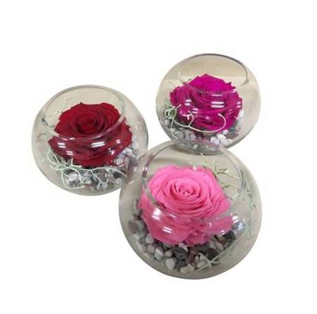 Long Lasting Preserved Rose in a Fish Bowl