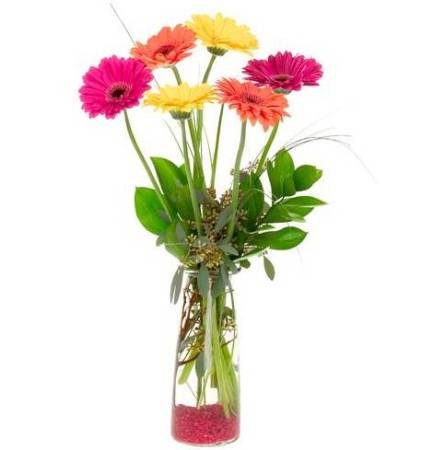 Gerberas in a Jar